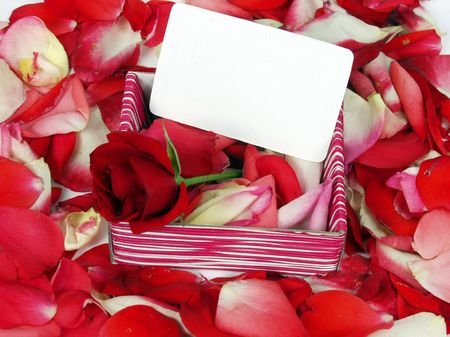 red rose on a gift box with blank card for valentine day photo
