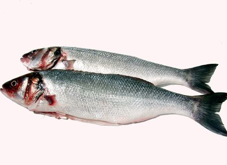 two fresh sea bass ready for cook on white background photo