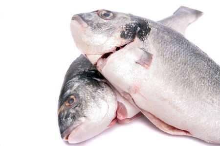 gilthead bream: two fresh Gilthead Bream head on white background Stock Photo