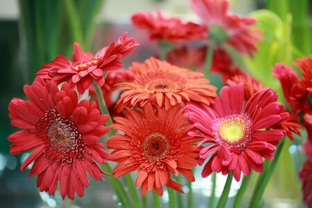 a red bouquet of gerberas on florist�s photo
