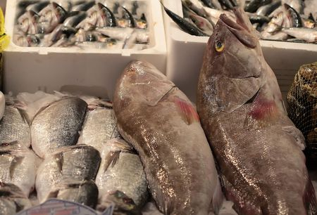 dusky sea perch on ice in a morocco market Stock Photo - 920785