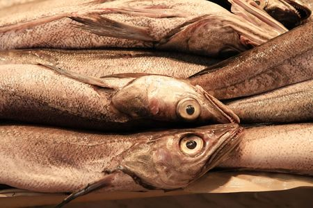 fishmonger: some fresh youngs hake on a fishmonger