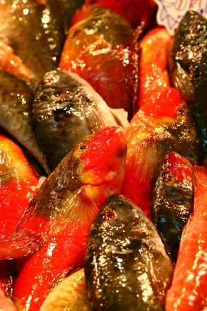 fishmonger: red and grey parrotfish on a fishmonger market
