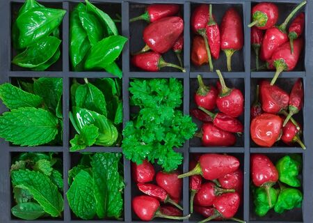 old grey wooden box with differents hot red chili peppers and fresh herbs with drops photo