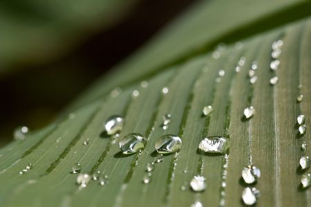 rain water drops on banana tree leaf Stock Photo - 1808902