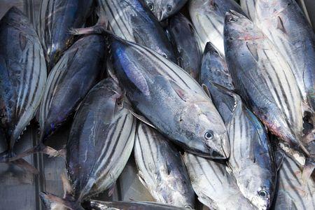 visboer: verse witte tonijn op stalen doos op de vis boer  Stockfoto