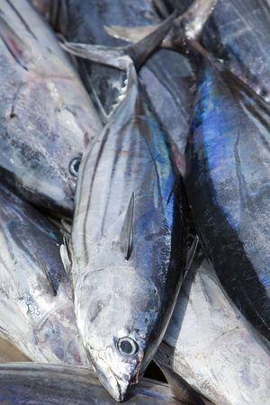 visboer: verse witte tonijn in stalen doos op vishandelaar