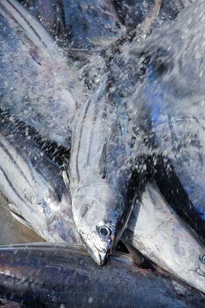 fishmonger: fresh white tuna in steel box on fishmonger Stock Photo