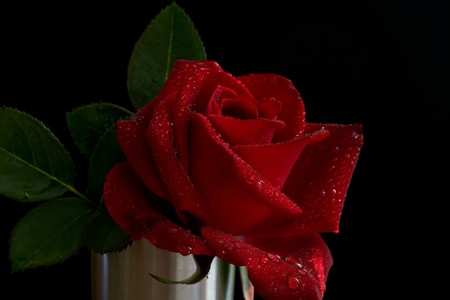 red rose on silver vase with some green leaf photo