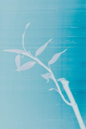 breezy: bamboo leaves and plant on blue textured background