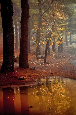 green leafs: autumn colors in the chestnut and pine forest