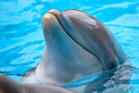 bottle nose dolphin head and eye on blue water Stock Photo - 11556467