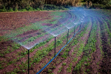 agriculture industrial: water irrigation of potato field on sunny day