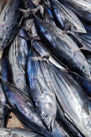visboer: verse tonijn van dichtbij op visboer