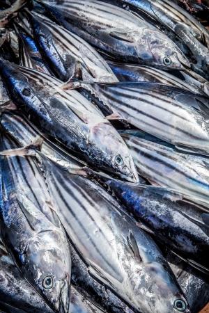 fishmonger: fresh tuna fish close up on fishmonger