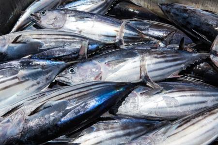 visboer: verse tonijn close-up op vishandelaar