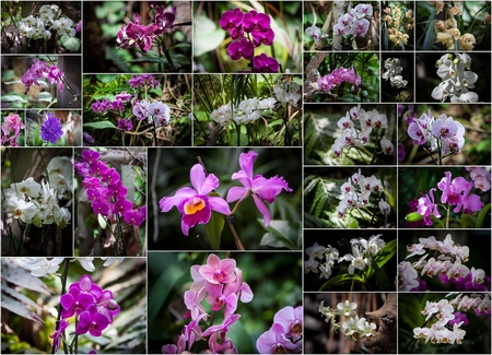 collage with different types of orchids in a garden photo