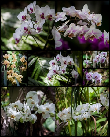 dendrobium: collage with different types of orchids in a garden