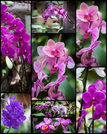 orchideae: collage with different types of orchids in a garden