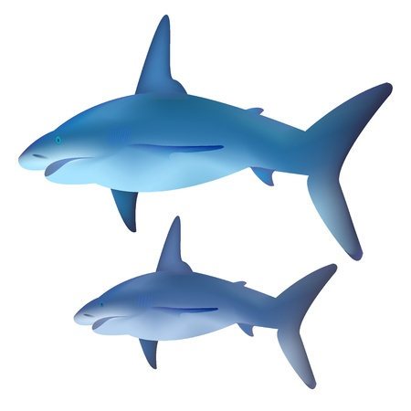 Vector shark for your design Vector