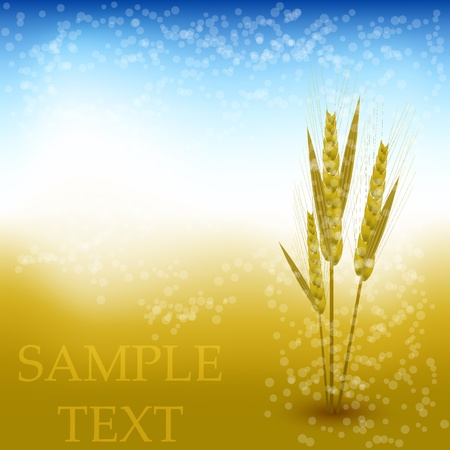 fv: Vector wheat abstract background Illustration