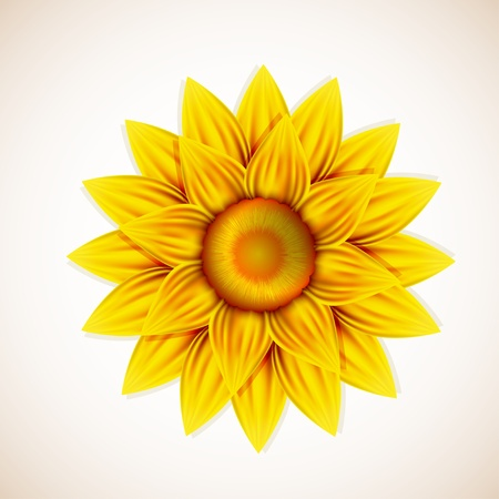 sunflower isolated: flor.