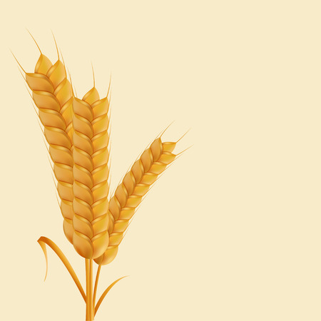 place for your text: modern wheat background with place for your text