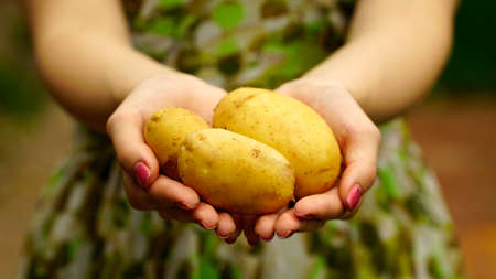 holding close: Woman holding a young potatoes close up