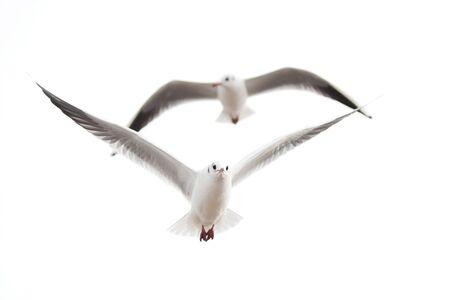 two seagulls photo