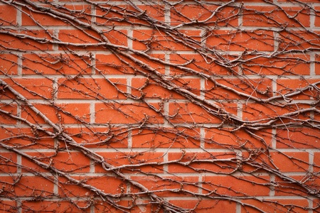 brick wall background Stock Photo - 9959727