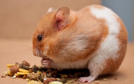 Hamster Ernährung Standard-Bild - 10041536