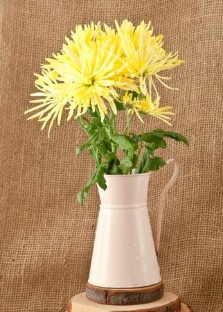 chrysanthemum flowers on hessian