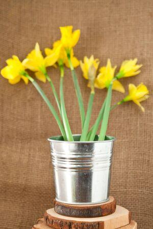 daffodils on hessian photo