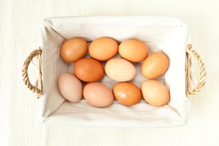 reproduction animal: fresh eggs Stock Photo
