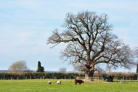 Farm animals in a field photo