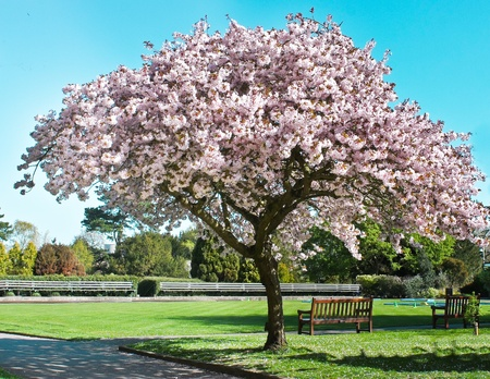 spring blossom tree on a sunny day Stock Photo