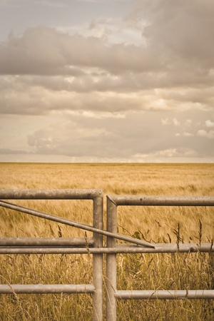Metal gate in front of a field of barley in Suffolk, UK Stock Photo - 10040864