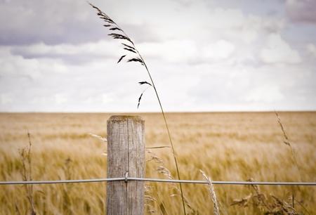 Valla puesto delante de un campo de cebada Foto de archivo