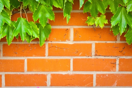 A vibrant brick wall background with green ivy leaves
