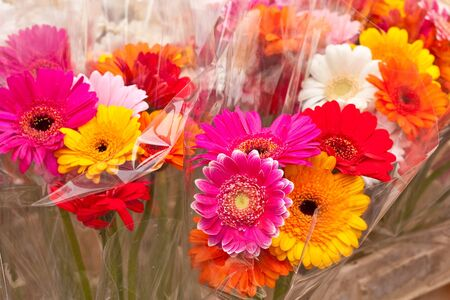 cellophane: Bunches of colorful flowers in cellophane