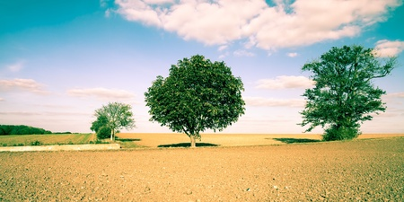 suffolk: A beautiful rural scene of English farmland showing freshly tilled soil