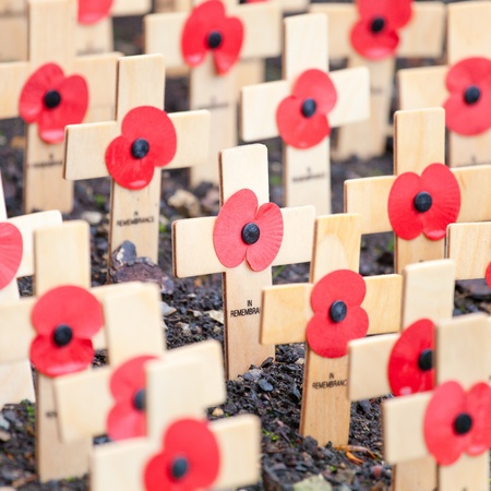 Poppies on wooden crosses to comemmorate remembrance day in the UK photo
