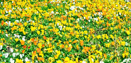 Colorful orange, yellow and white wild flowers in a meadow photo