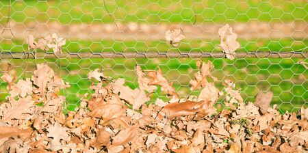 Autumn leaves gathering against a wire fence photo