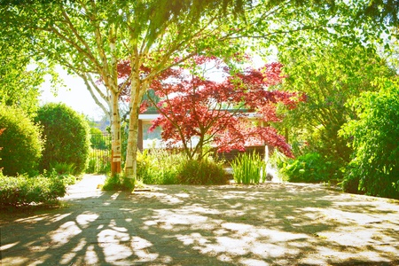 A shaded garden courtyard with spring color Stock Photo - 15636738