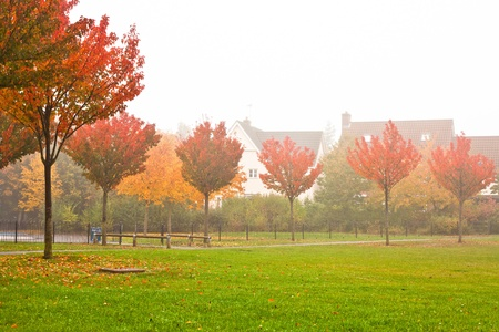 Colorful trees in the autumn mist in the UK Stock Photo - 16772219