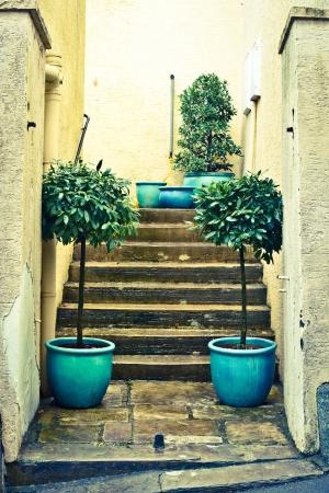 Pair of laurel plants next to concrete steps photo