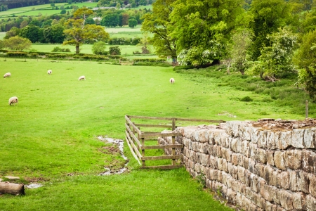 hadrian: Preserved section of Hadrians Wall in Northumberland, UK