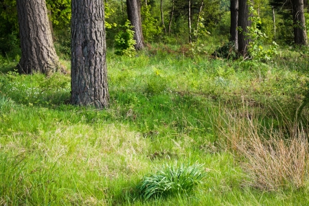A grass clearing in a beautiful forest photo