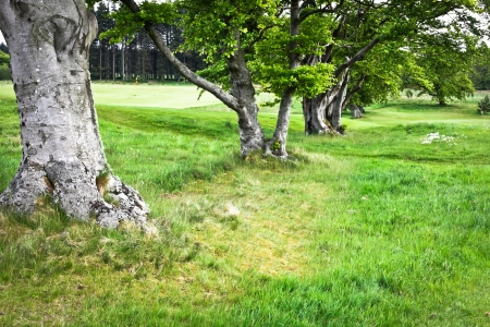 Row of tree trunks in a lush green grass clearing photo